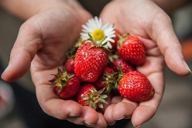 jahody v dlaních