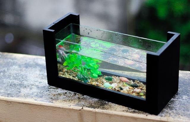 akvarijní rostlina