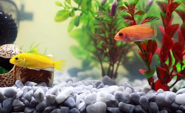 rybičky v akvárku
