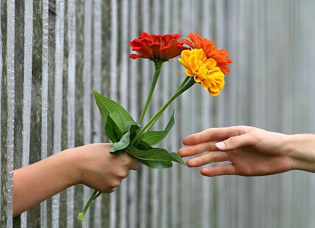 předávání květiny