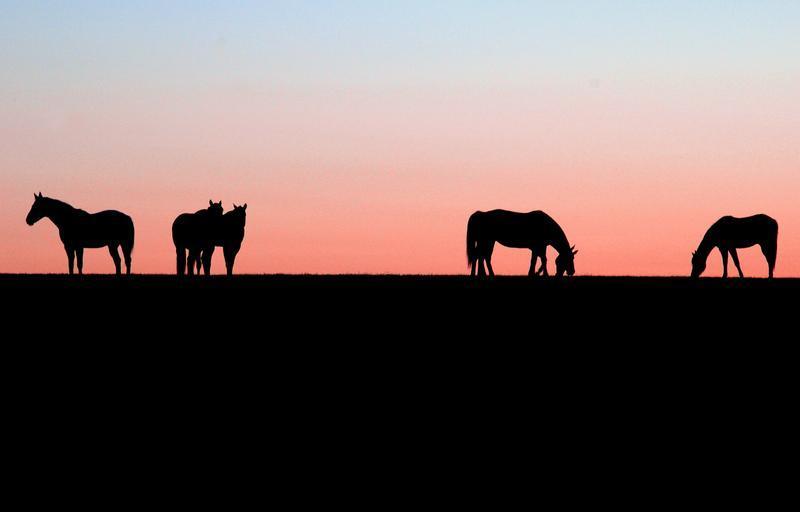 Podvečerní pastva