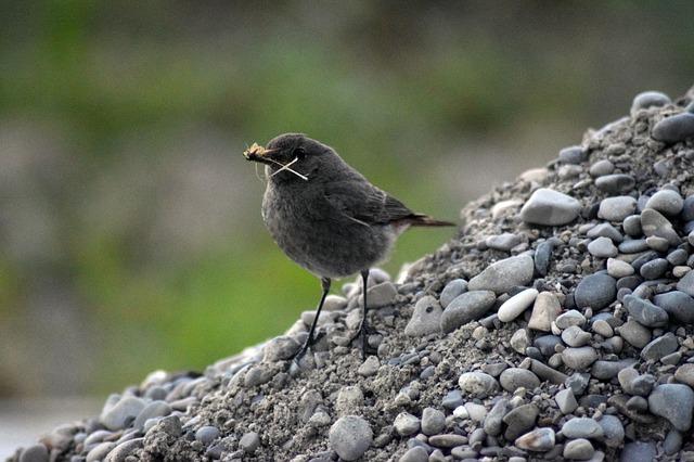 malý hladoví ptáček – nakrmte ho
